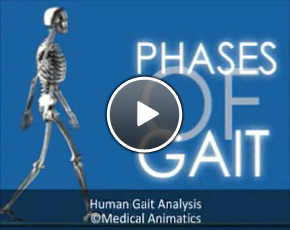 Click here to view the human gait cycle